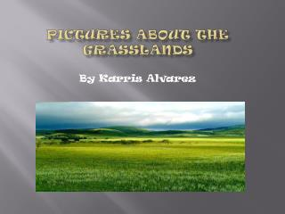 Pictures About The Grasslands