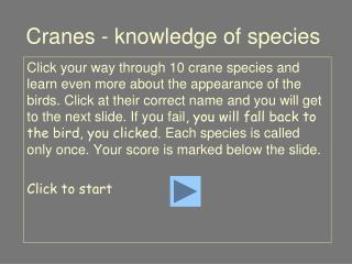 Cranes - knowledge of species