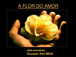A FLOR DO AMOR
