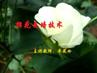 棉花栽培技术 主讲教师:牟筱玲