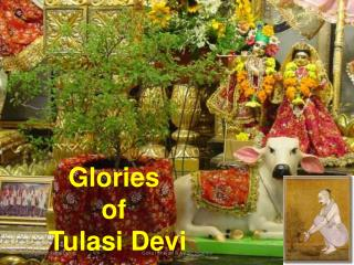 Glories  of  Tulasi Devi