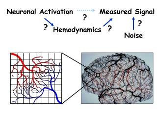 Neuronal Activation