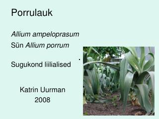 Porrulauk Allium ampeloprasum Sün  Allium porrum Sugukond liilialised