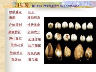 川贝母 Bulbus Fritillariae Cirrhosae