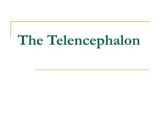 The Telencephalon