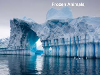 Frozen Animals