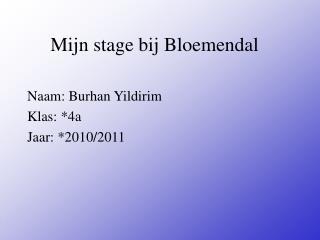 Mijn stage bij Bloemendal
