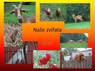 Naše zvířata