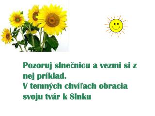 Naším n ajväčším  šťastím sú drobné slnečné lúče, dopadajúce denne na našu cestu.