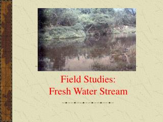 Field Studies:  Fresh Water Stream