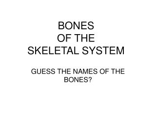 BONES OF THE SKELETAL SYSTEM