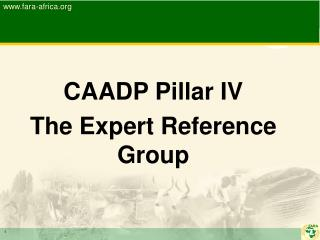 CAADP Pillar IV  The Expert Reference Group