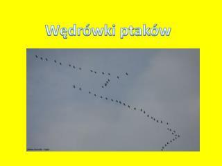 W?dr�wki ptak�w