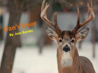 Dan's Deer By: Joey Barnes