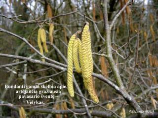 Bundanti gamta skelbia apie artėjančią gražiausią pavasario šventę –  Velykas.