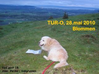 TUR-O, 28.mai 2010 Blommen