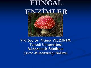 FUNGAL ENZIMLER