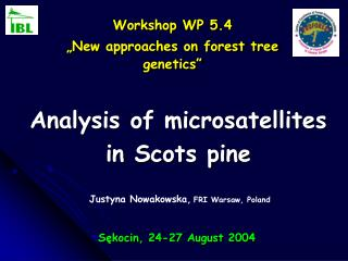 Analysis of microsatellites in Scots pine