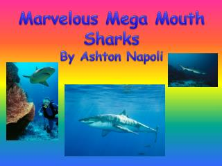 Marvelous Mega Mouth Sharks By Ashton Napoli