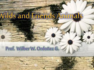 Wilds  and  Friends Animals
