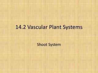 14.2 Vascular Plant Systems