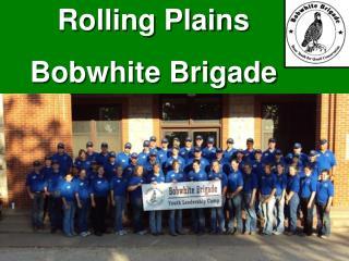 Texas Brigades: