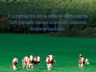 Cruzamiento de la raza Montbeliarde con ganado veracruzano en sistema doble propósito.
