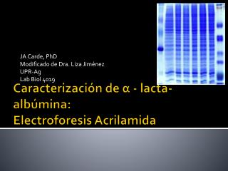 Caracterizaci�n  de ? -  lacta-alb�mina : Electroforesis Acrilamida