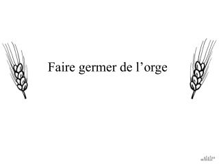 Faire germer de l'orge