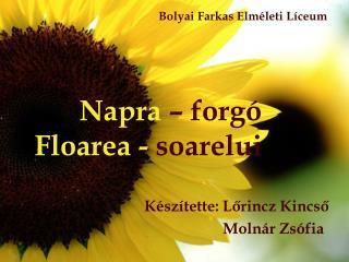 Napra  – forgó Floarea -  soarelui