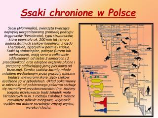 Ssaki chronione w Polsce