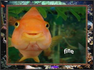 Rybí  keep smiling