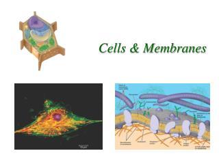 Cells & Membranes