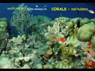 CORALS –  reef builders