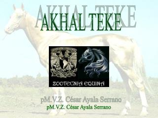 AKHAL TEKE