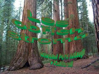 Les obřích stromů
