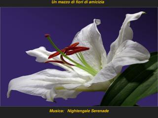 Musica:   Nightengale Serenade