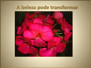 A beleza pode transformar