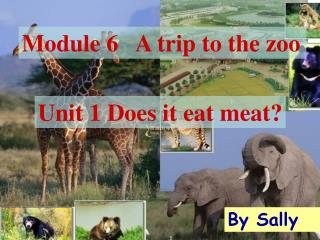 Module 6   A trip to the zoo