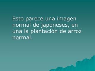 Esto parece una imagen normal de japoneses, en una la plantación de arroz normal.