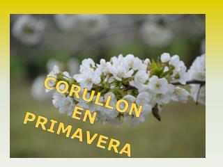 CORULLON EN  PRIMAVERA