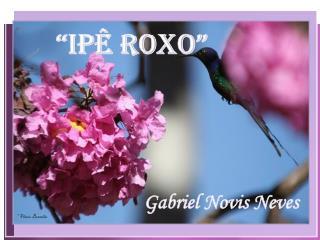 """""""Ipê Roxo"""""""