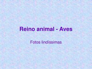 Reino animal - Aves