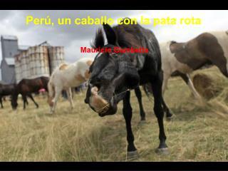 Perú, un caballo con la pata rota  Mauricio  Gambetta