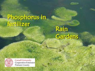 Phosphorus in fertilizer