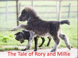 The Tale of Rory and Millie