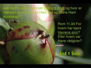 Rom 11,34 For hvem har kjent  Herrens sinn ? Eller hvem var Hans rådgiver?