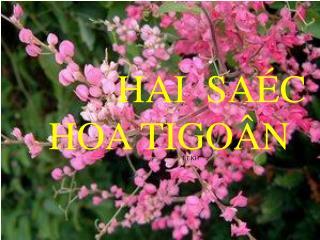 HAI  SAÉC  HOA TIGOÂN