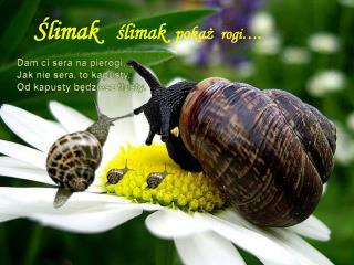 Ślimak    ślimak   pokaż   rogi….