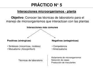 Interacciones microorganismos - planta